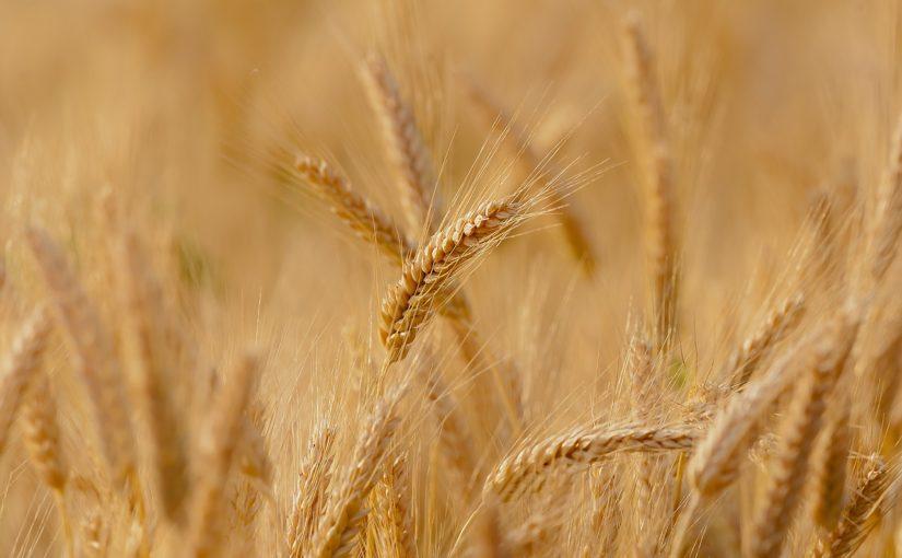https://sklep.arkop.pl/rolnictwo/rzepak-ozimy.html