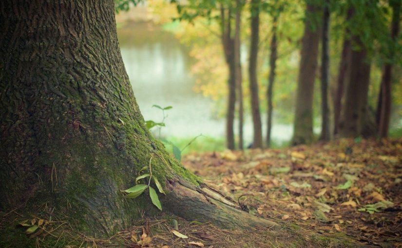 Przepiękny oraz {miły dla oczu zieleniec to nie lada wyzwanie, zwłaszcza jak jego konserwacją zajmujemy się sami.
